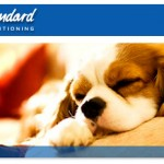 american-standard-dog