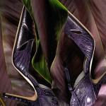 web-ron-don-shoes-purple